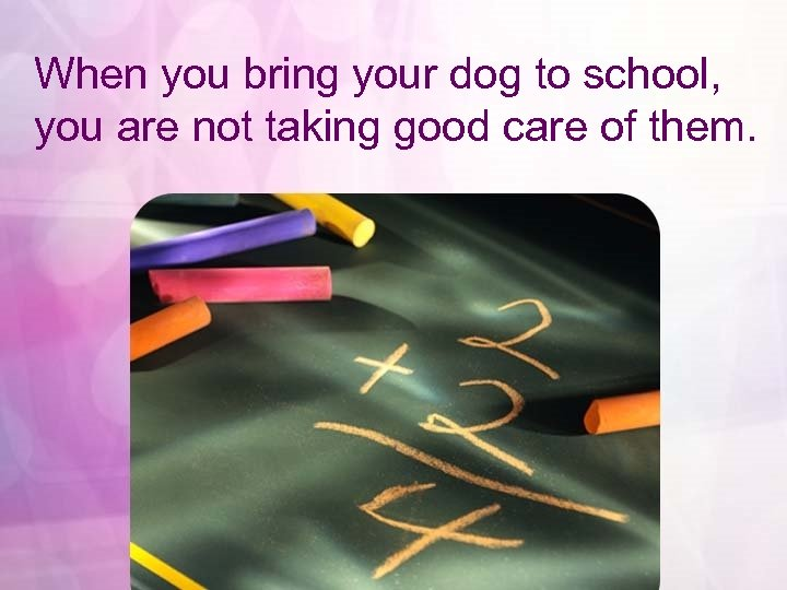 When you bring your dog to school, you are not taking good care of