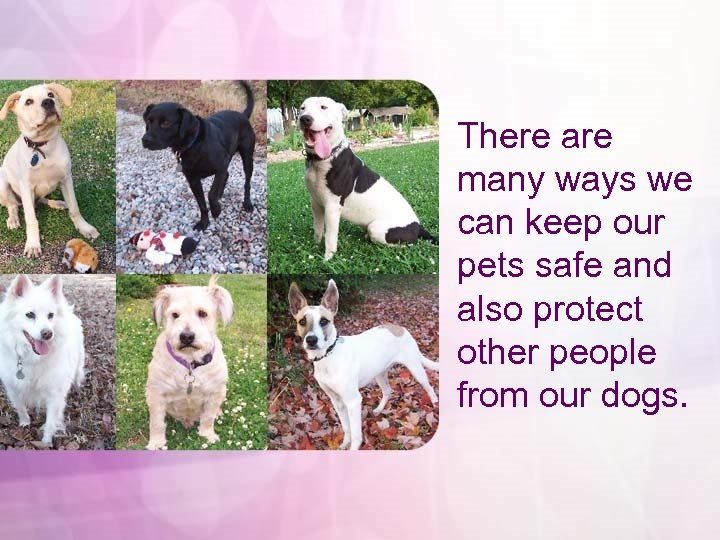 There are many ways we can keep our pets safe and also protect other