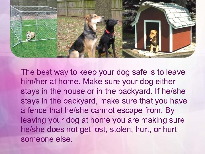 The best way to keep your dog safe is to leave him/her at home.