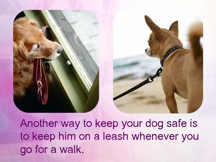 Another way to keep your dog safe is to keep him on a leash
