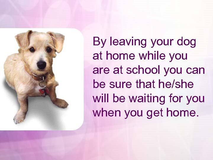 By leaving your dog at home while you are at school you can be