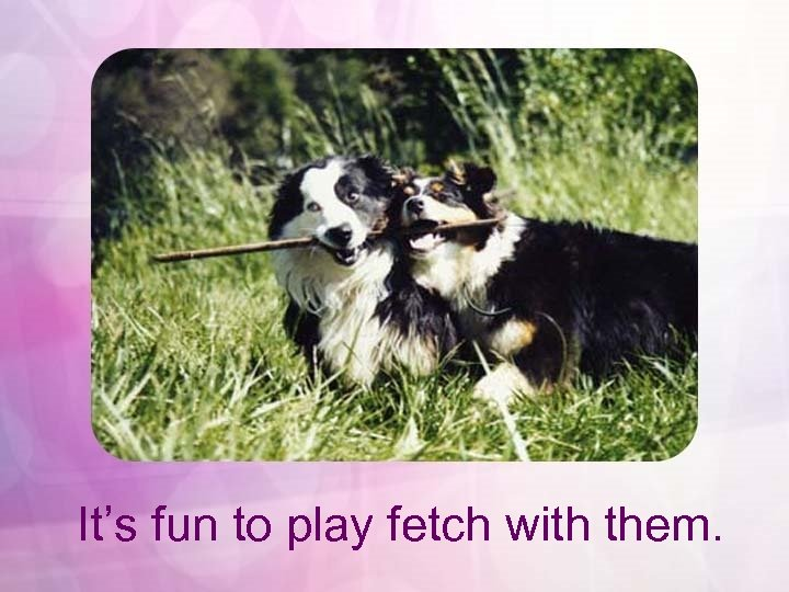 It's fun to play fetch with them.