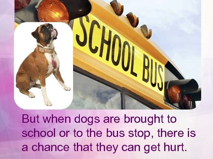 But when dogs are brought to school or to the bus stop, there is