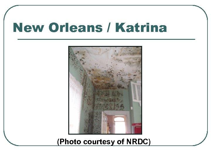 New Orleans / Katrina (Photo courtesy of NRDC)