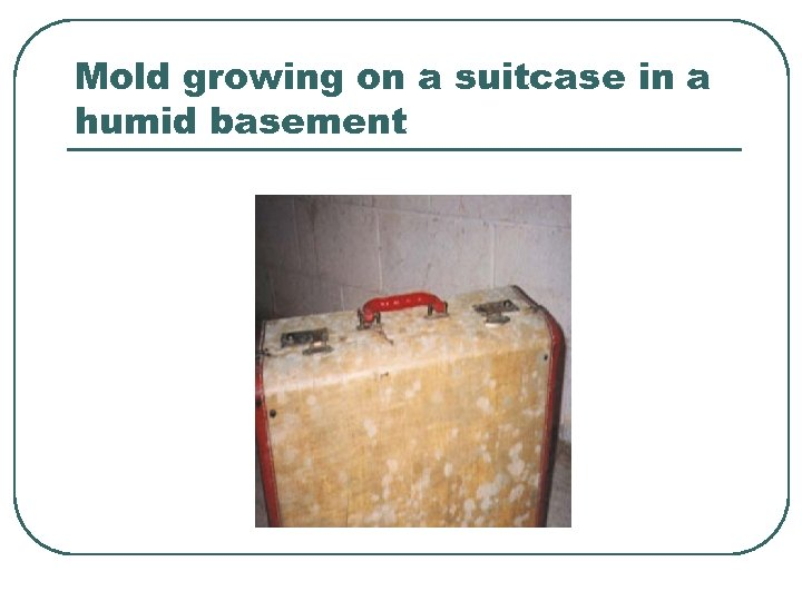 Mold growing on a suitcase in a humid basement