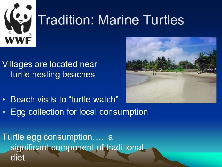 Tradition: Marine Turtles Villages are located near turtle nesting beaches • Beach visits to
