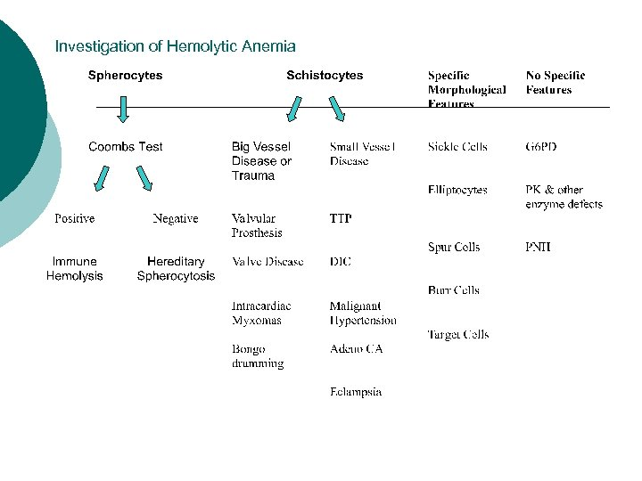 Investigation of Hemolytic Anemia