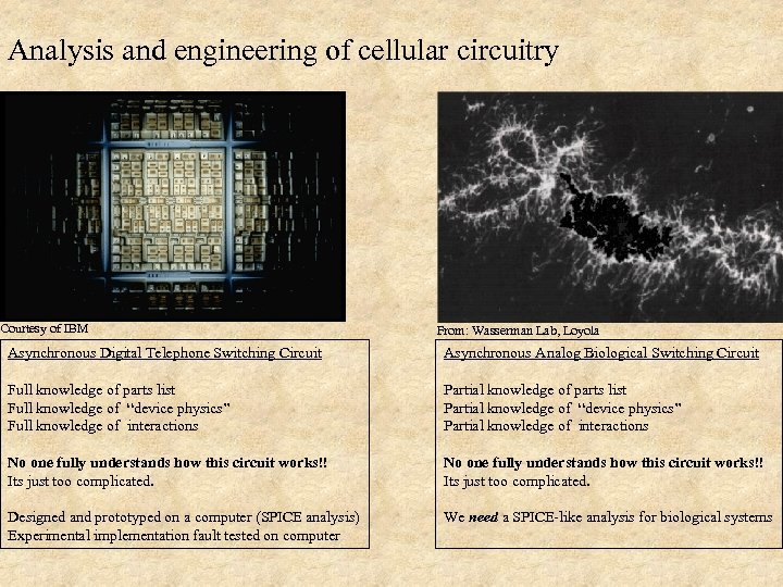 Analysis and engineering of cellular circuitry Courtesy of IBM From: Wasserman Lab, Loyola Asynchronous