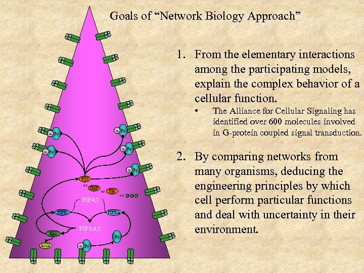 """Goals of """"Network Biology Approach"""" 1. From the elementary interactions among the participating models,"""