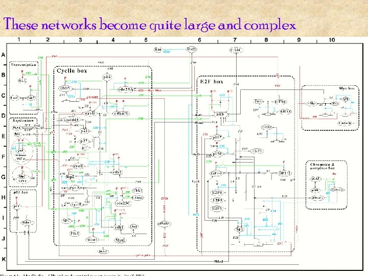 These networks become quite large and complex