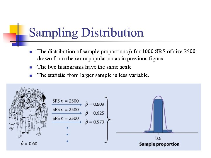 Sampling Distribution n The distribution of sample proportions for 1000 SRS of size 2500