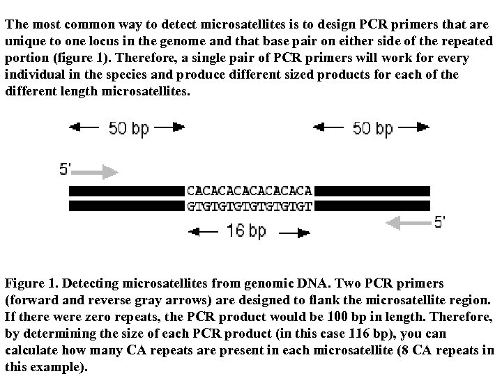 The most common way to detect microsatellites is to design PCR primers that are