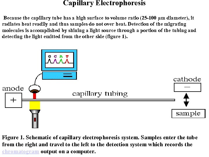 Capillary Electrophoresis Because the capillary tube has a high surface to volume ratio (25
