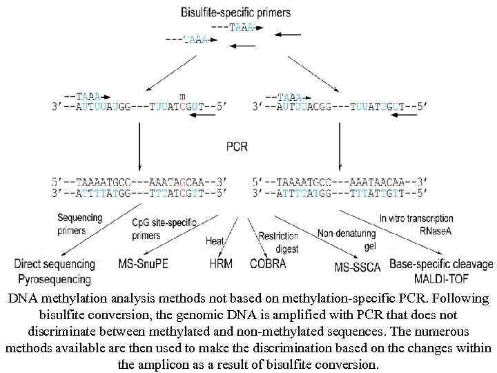 DNA methylation analysis methods not based on methylation-specific PCR. Following bisulfite conversion, the genomic