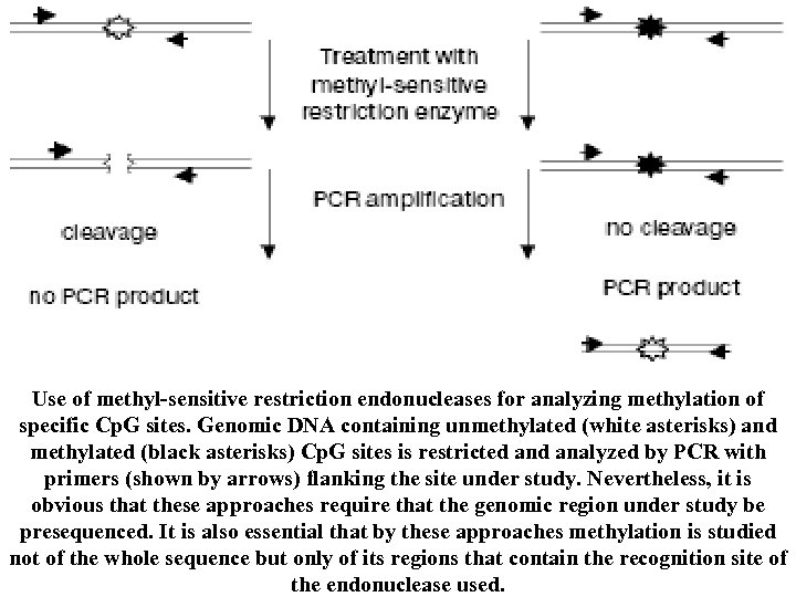 ]. Use of methyl-sensitive restriction endonucleases for analyzing methylation of specific Cp. G sites.