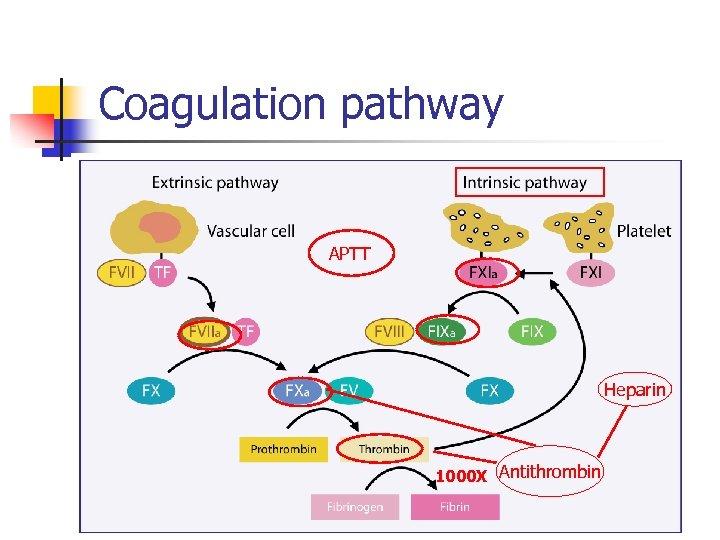 Coagulation pathway APTT Heparin 1000 X Antithrombin