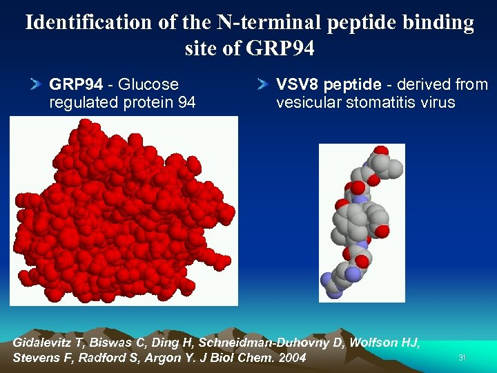Identification of the N-terminal peptide binding site of GRP 94 - Glucose regulated protein