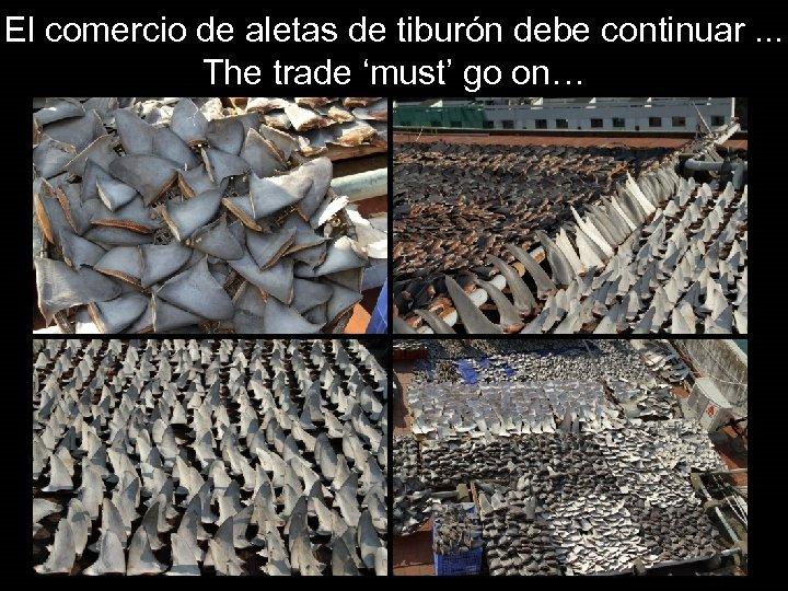 El comercio de aletas de tiburón debe continuar. . . The trade 'must' go