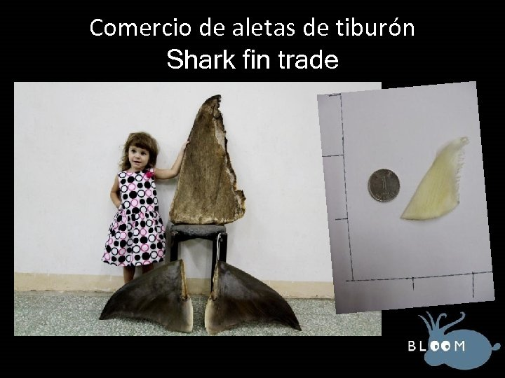 Comercio de aletas de tiburón Shark fin trade