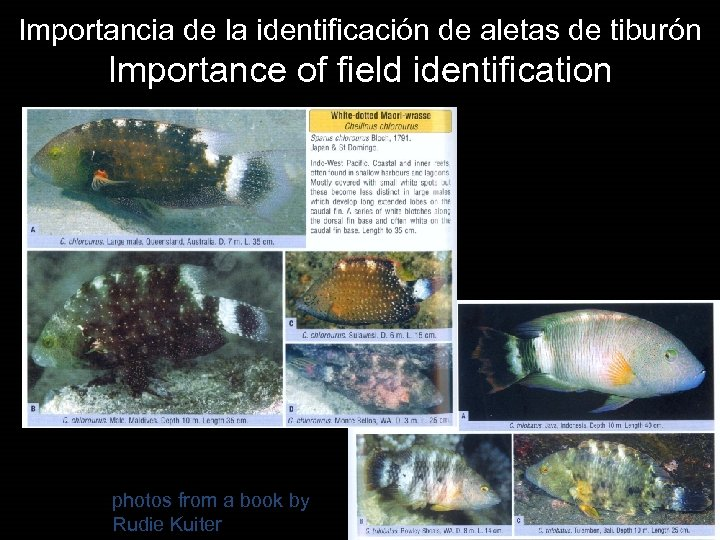 Importancia de la identificación de aletas de tiburón Importance of field identification photos from