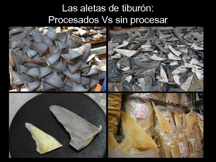 Las aletas de tiburón: Procesados Vs sin procesar