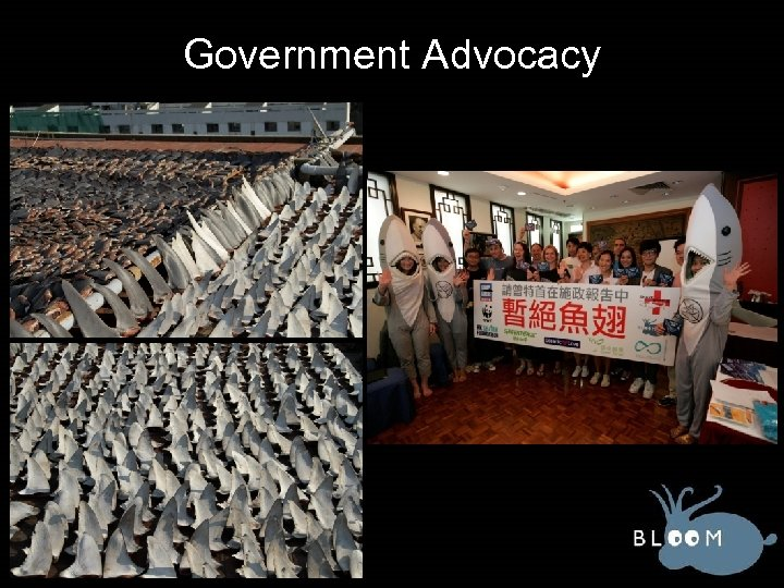 Government Advocacy