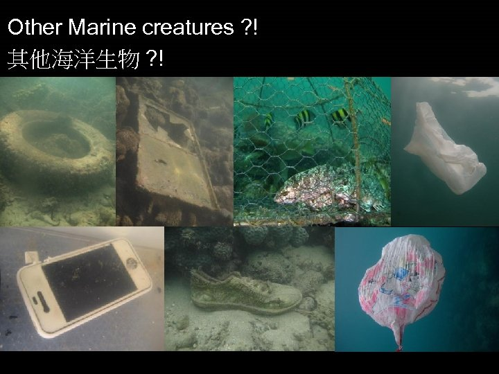 Other Marine creatures ? ! 其他海洋生物 ? !