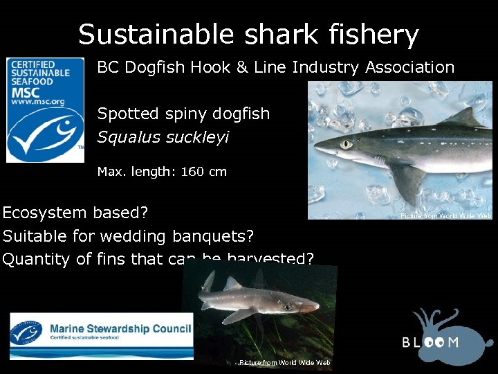 Sustainable shark fishery BC Dogfish Hook & Line Industry Association Spotted spiny dogfish Squalus