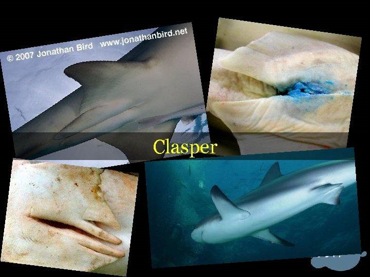 Clasper