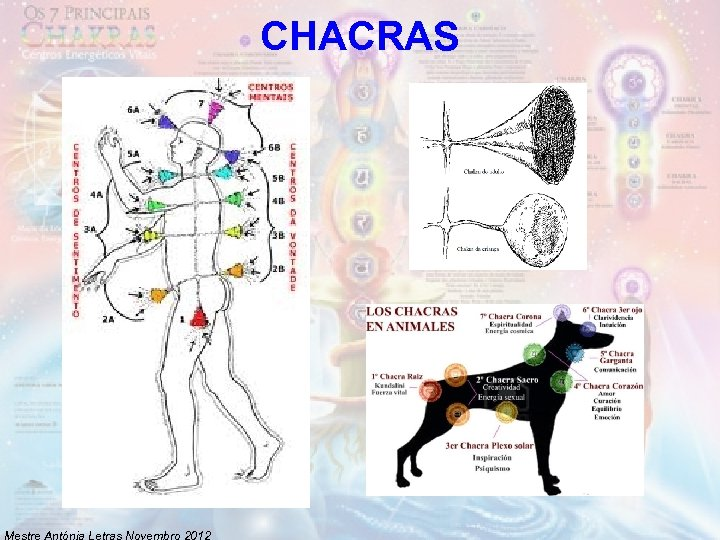 CHACRAS Mestre Antónia Letras Novembro 2012