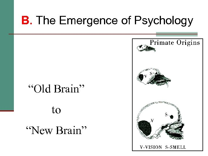 """B. The Emergence of Psychology """"Old Brain"""" to """"New Brain"""""""