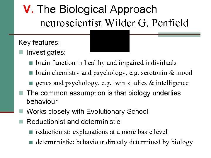 V. The Biological Approach neuroscientist Wilder G. Penfield Key features: n Investigates: n brain