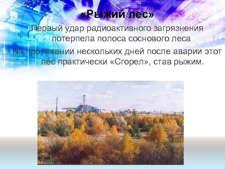 «Рыжий лес» Первый удар радиоактивного загрязнения потерпела полоса соснового леса На протяжении нескольких