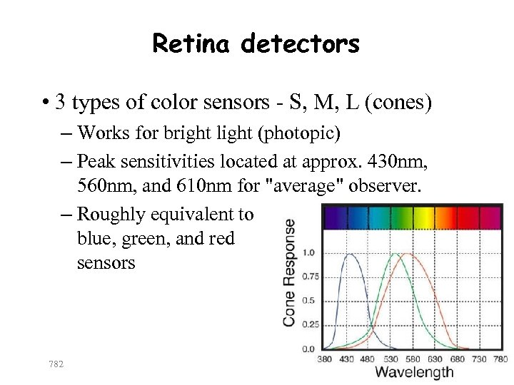 Retina detectors • 3 types of color sensors - S, M, L (cones) –