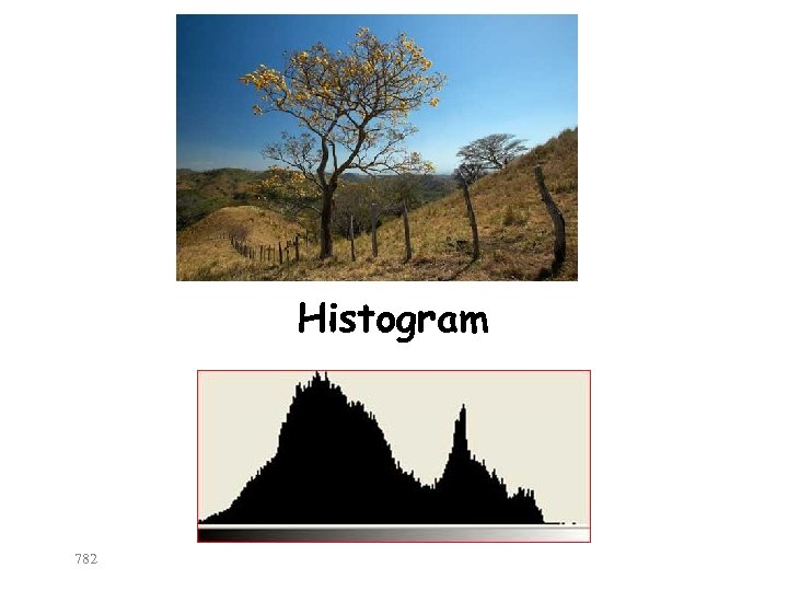 Histogram 782