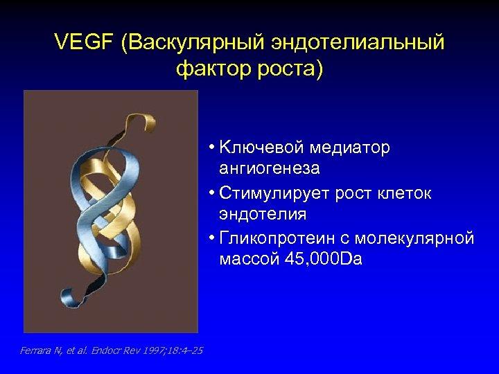 VEGF (Васкулярный эндотелиальный фактор роста) • Kлючевой медиатор ангиогенеза • Стимулирует рост клеток эндотелия