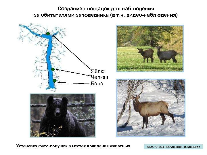 Создание площадок для наблюдения за обитателями заповедника (в т. ч. видео-наблюдения) Яйлю Челюш Беле
