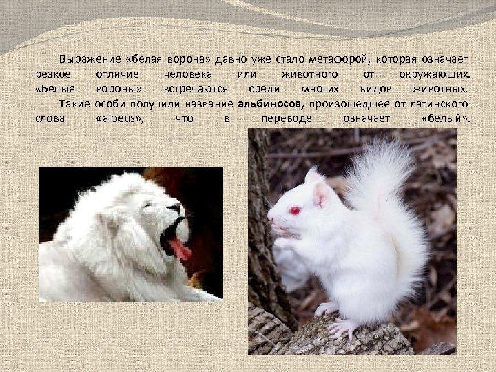 Выражение «белая ворона» давно уже стало метафорой, которая означает резкое отличие человека или животного