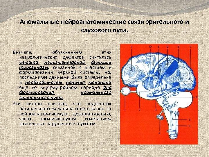 Аномальные нейроанатомические связи зрительного и слухового пути. Вначале, объяснением этих неврологических дефектов считалась утрата