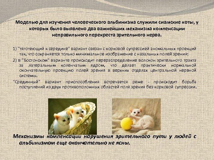 Моделью для изучения человеческого альбинизма служили сиамские коты, у которых было выявлено два важнейших