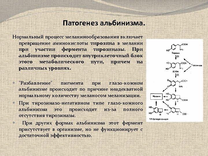Патогенез альбинизма. Нормальный процесс меланинообразования включает превращение аминокислоты тирозина в меланин при участии фермента