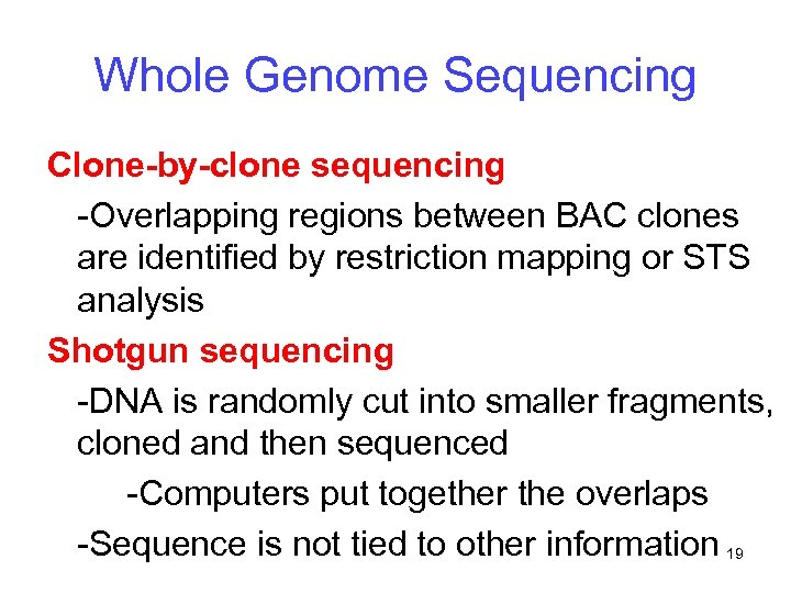 Whole Genome Sequencing Clone-by-clone sequencing -Overlapping regions between BAC clones are identified by restriction
