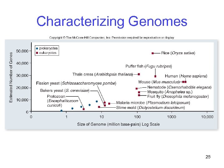 Characterizing Genomes 25