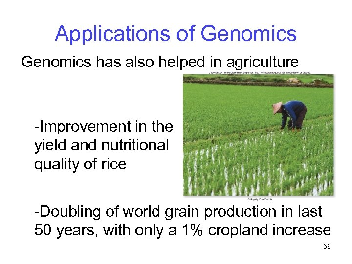 Applications of Genomics has also helped in agriculture -Improvement in the yield and nutritional