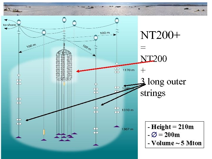 NT 200+ = NT 200 + 3 long outer strings - Height = 210