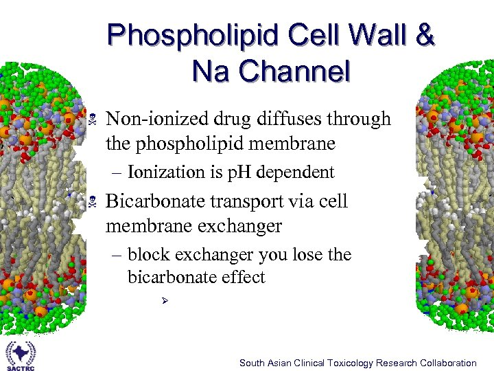 Phospholipid Cell Wall & Na Channel N Non-ionized drug diffuses through the phospholipid membrane