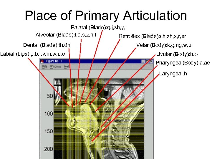 Place of Primary Articulation Palatal (Blade): q, j, sh, y, i Alveolar (Blade): t,