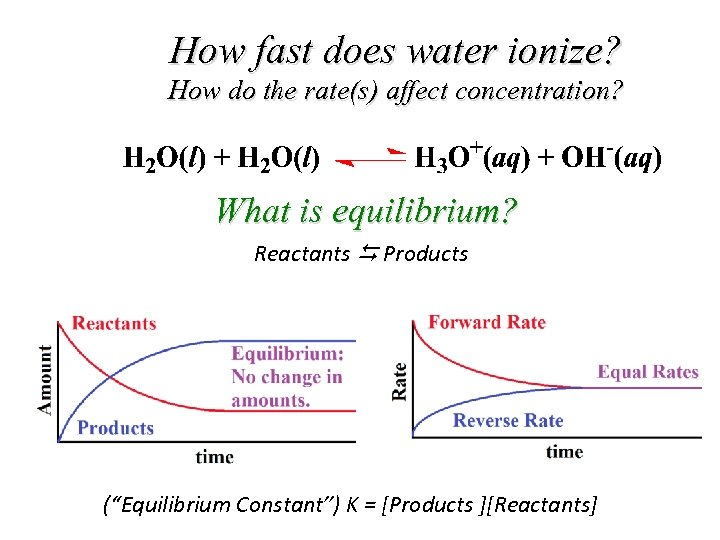 How fast does water ionize? How do the rate(s) affect concentration? What is equilibrium?