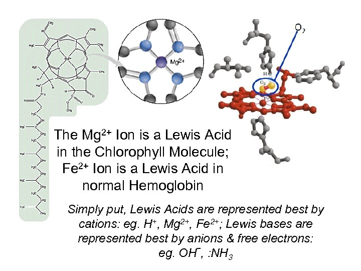 The Mg 2+ Ion is a Lewis Acid in the Chlorophyll Molecule; Fe 2+