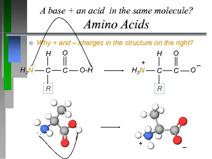 A base + an acid in the same molecule? Amino Acids Why + and